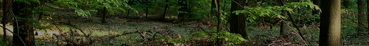 Forsthaus Haidberg